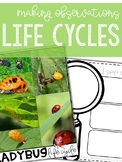 Making Observations: LIFE CYCLES of Animals