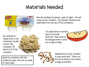 Making and Observing a Suitable Mealworm Habitat Lab Packet