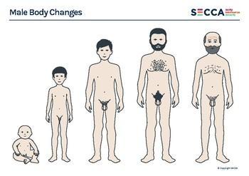 Male Body Changes Activity Sheet (A4 printable .pdf)