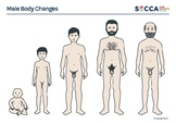 Male Body Changes Activity Sheet (A4 printable .pdf)