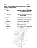 Male Female Reproductive Parts Quiz and Answer Key
