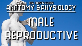 Male Reproductive System: Anatomy and Physiology