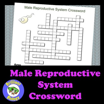 Male Reproductive System Crossword