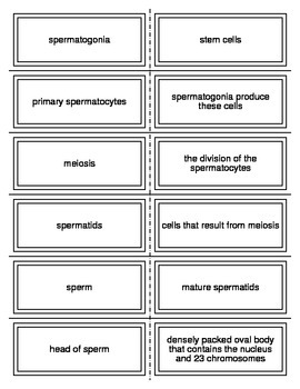 Male Reproductive System Flash Cards
