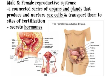 Male Reproductive System Lecture SMART Notebook