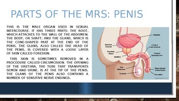 Male Reproductive System PowerPoint