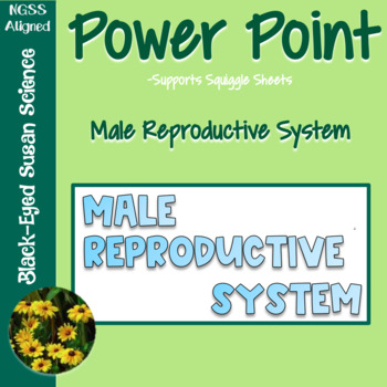 Male Reproductive System Squiggle Sheets --- POWER POINT