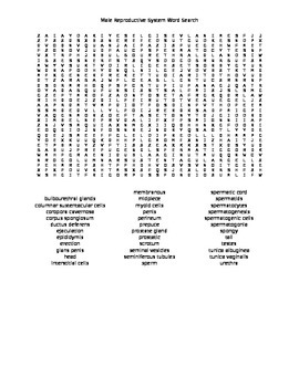 Male Reproductive System Word Search