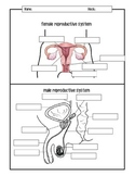 Male and Female Reproductive Systems Diagrams