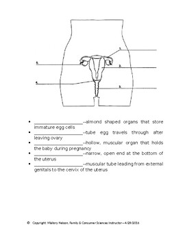 Male and Female Reproductive Systems Notes