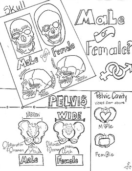 Male or Female? Forensic Anthropology  Sketch Notes Doodle Notes