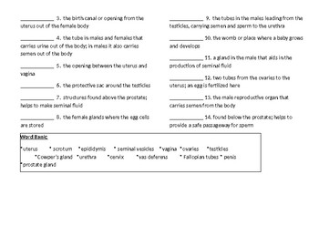 Males and Females Reproductive Anatomy Worksheet