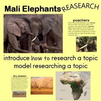 Mali Elephants Information Presentation