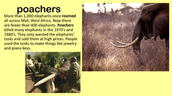Mali Elephants Close Reading