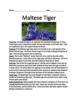 Maltese Blue Tiger - Cryptid Mythical creature lesson information facts