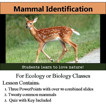 Mammal Identification - 20 Common Mammals - with assessment