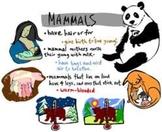 Mammal Literature Web