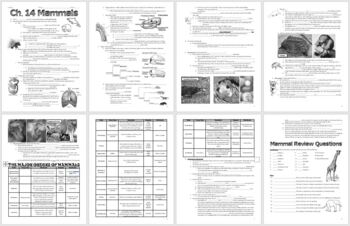 Mammal Notes Handout and Teacher Key (Biology / Zoology)