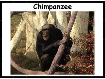 Mammal Posters #2