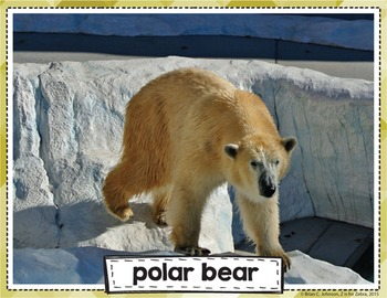 Mammal Vocabulary Posters & Cards