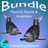 Mammal, Reptile & Amphibian Bundle