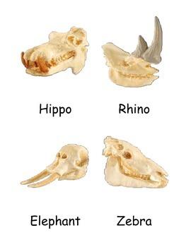 Mammal Skulls 3 Part Cards