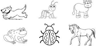Mammal Sort and Quiz