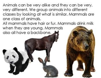 Mammal Teeth Book