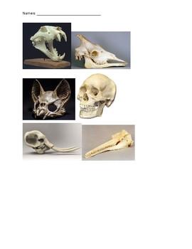 Mammal Teeth Sort