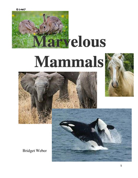 Mammal Unit