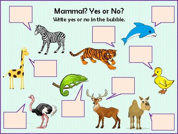 Mammal: Yes or no?