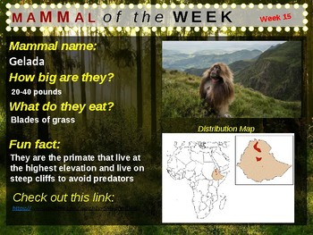 Mammal of the Week: 36 animals with facts, images, video links and more