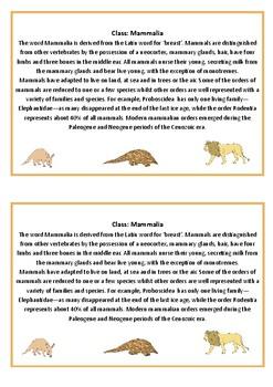 Mammalian Orders Pack