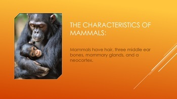 Mammals eBook PDF