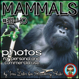 Photos Photographs Mammals #2  Science and Nature Personal and Commercial Use