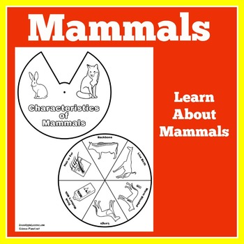 Mammals Activity