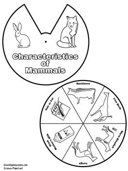 Mammals Activity | Mammals Worksheet | Mammals Craft