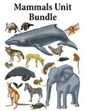 Mammals Activity Bundle K-2