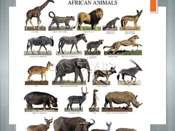 Mammals-Adverntures in Africa