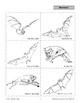 Mammals: Bats