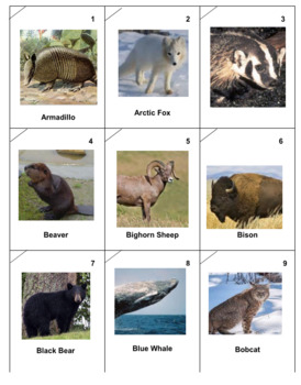 Mammals Battle -- Version 2