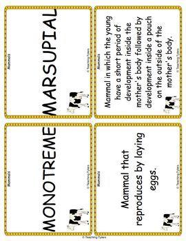 Mammals Vocabulary Cards