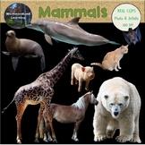 Mammals Clip Art Photo & Artistic Digital Stickers Animal Groups