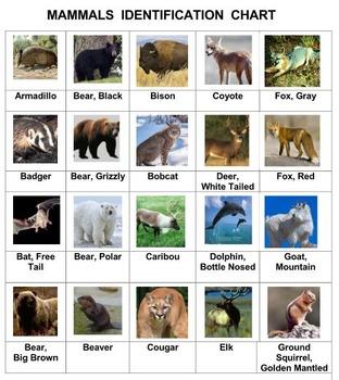 Mammals Concentration