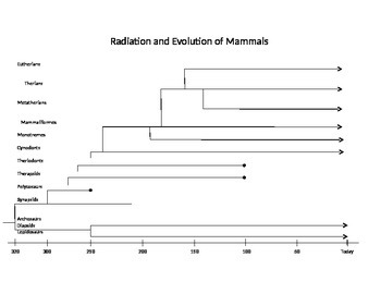 Mammals Evolution and Radiation Graphic