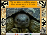 All About Mammals PowerPoint for Primary Grades