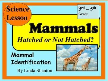 Mammals - Science Powerpoint lesson Grades 3-5