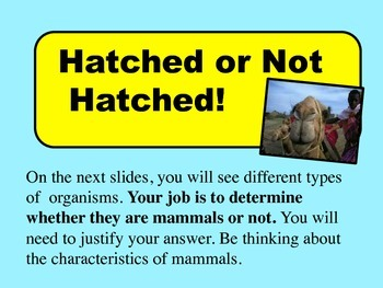 Mammals - Science Powerpoint lesson Grades 3-5