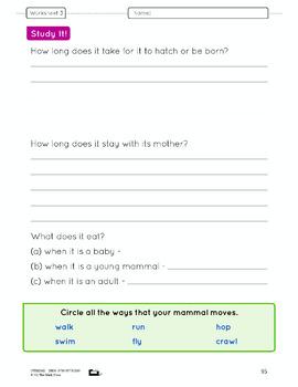 Mammals Lesson Plan Grade 3