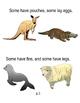 Mammals, Mammals